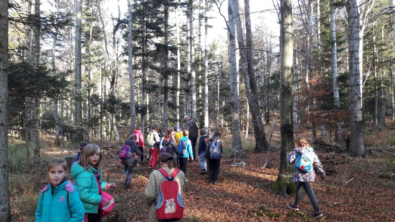 Naravoslovni dan tretješolcev v gozdu